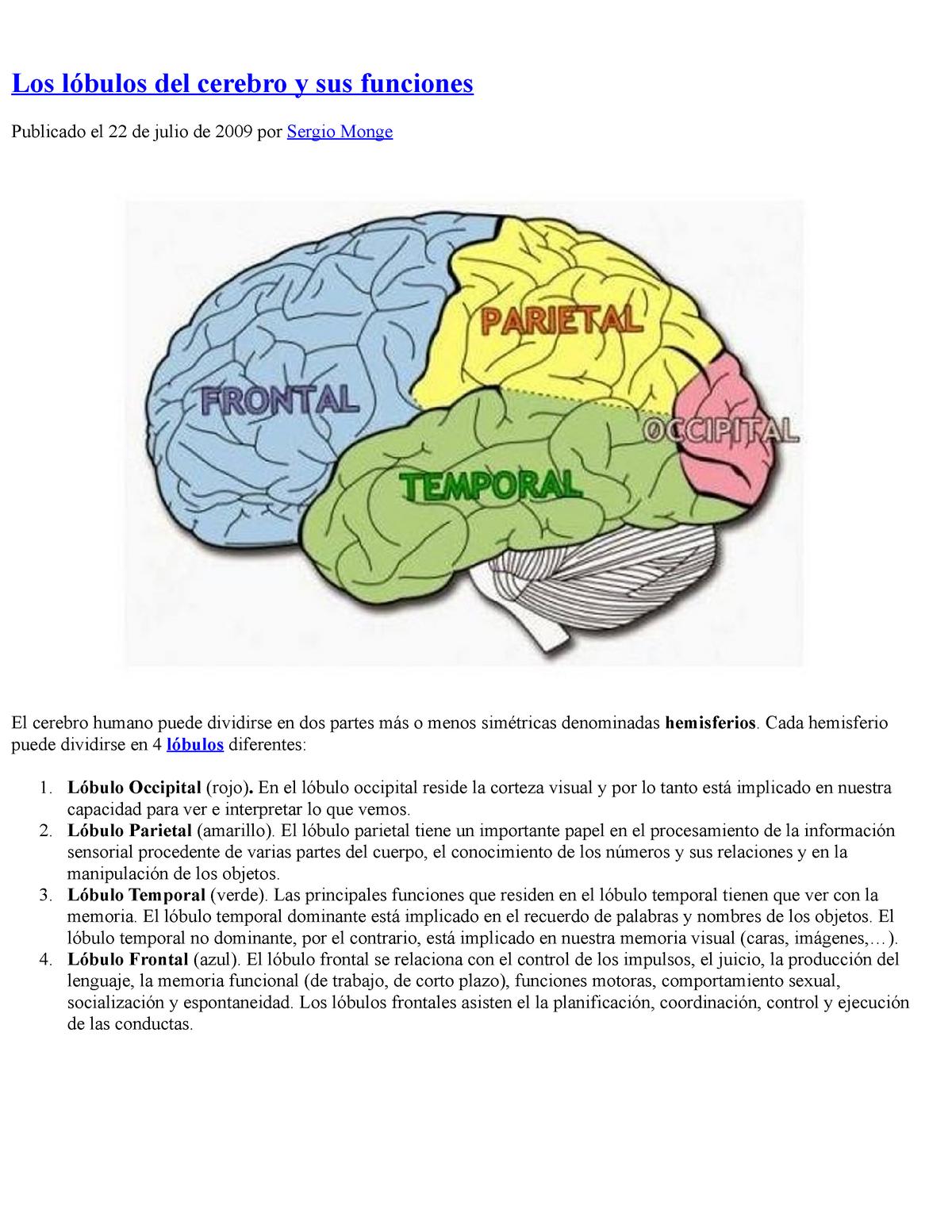 Los Lóbulos Del Cerebro Y Sus Funciones Studocu