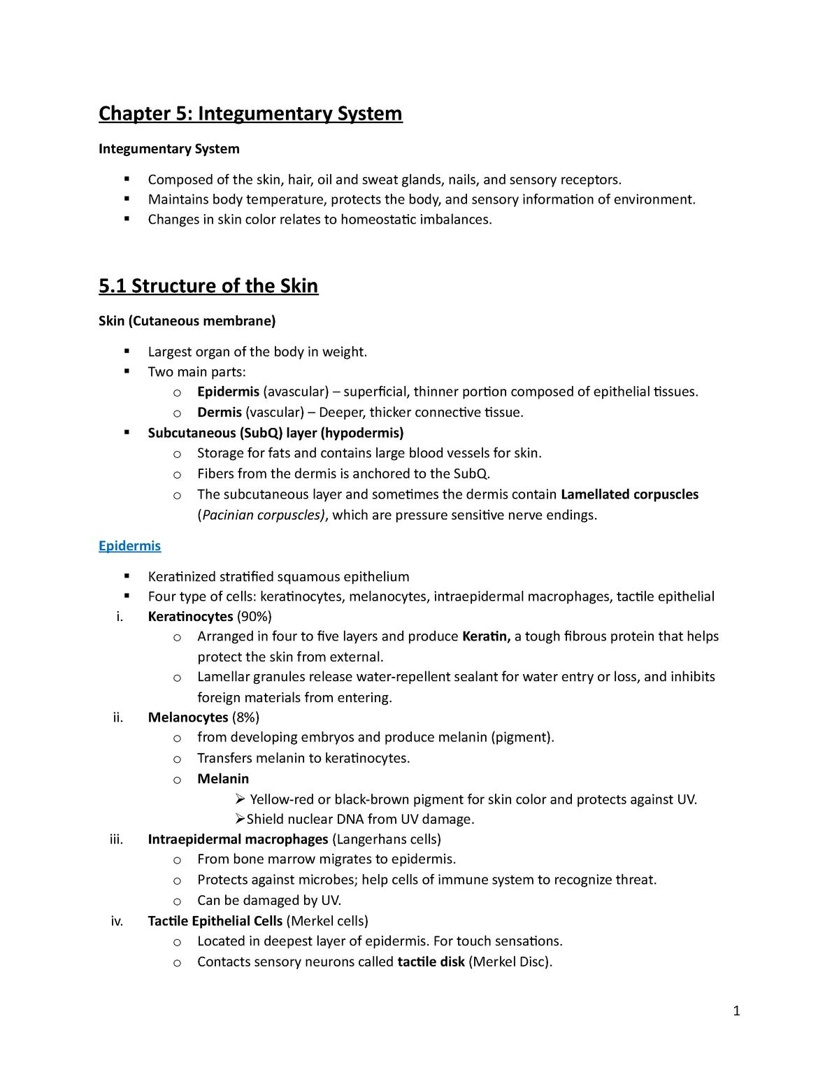 Chapter 5 Integumentary - Biol 235 - StuDocu