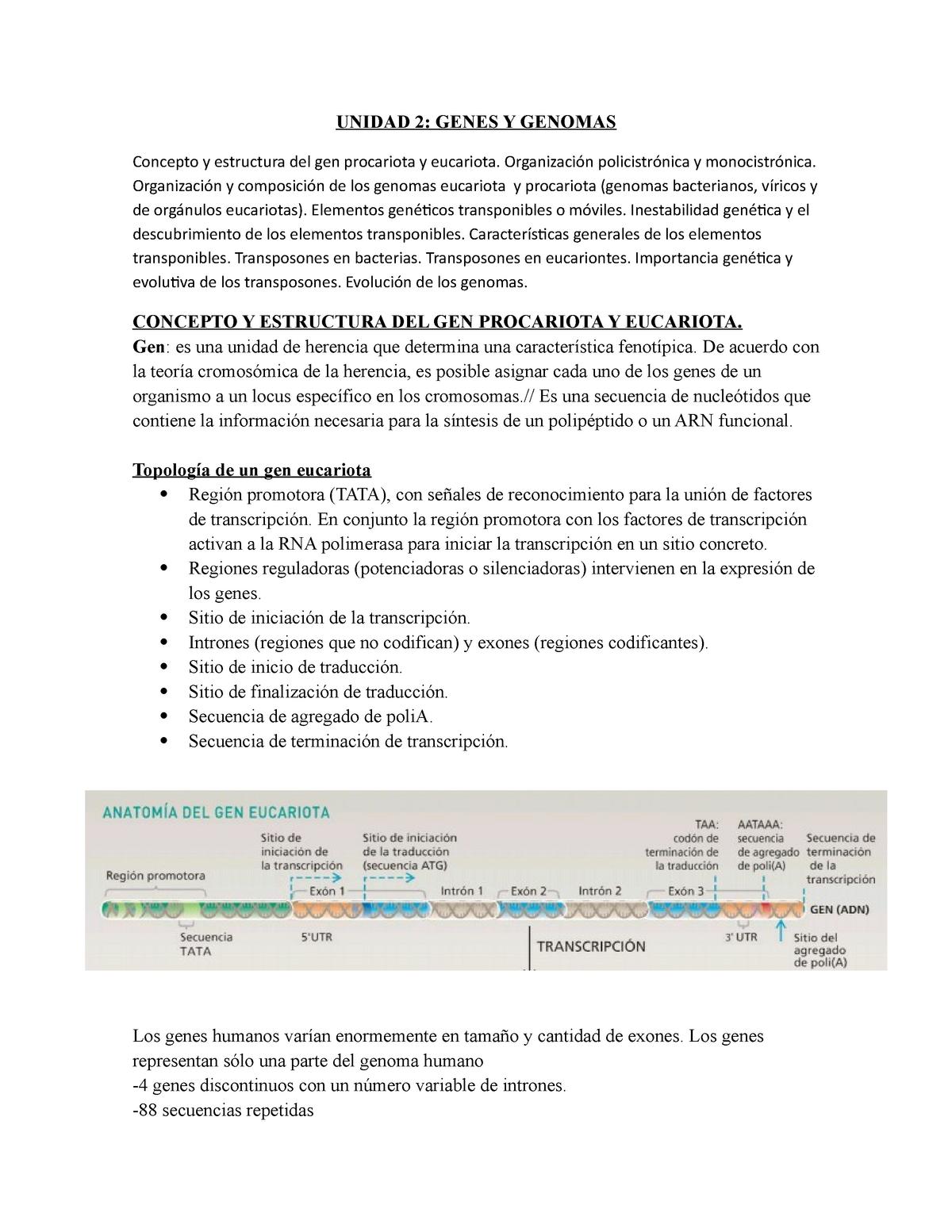 Unidad 2 Genes Y Genomass Genética Unne Studocu