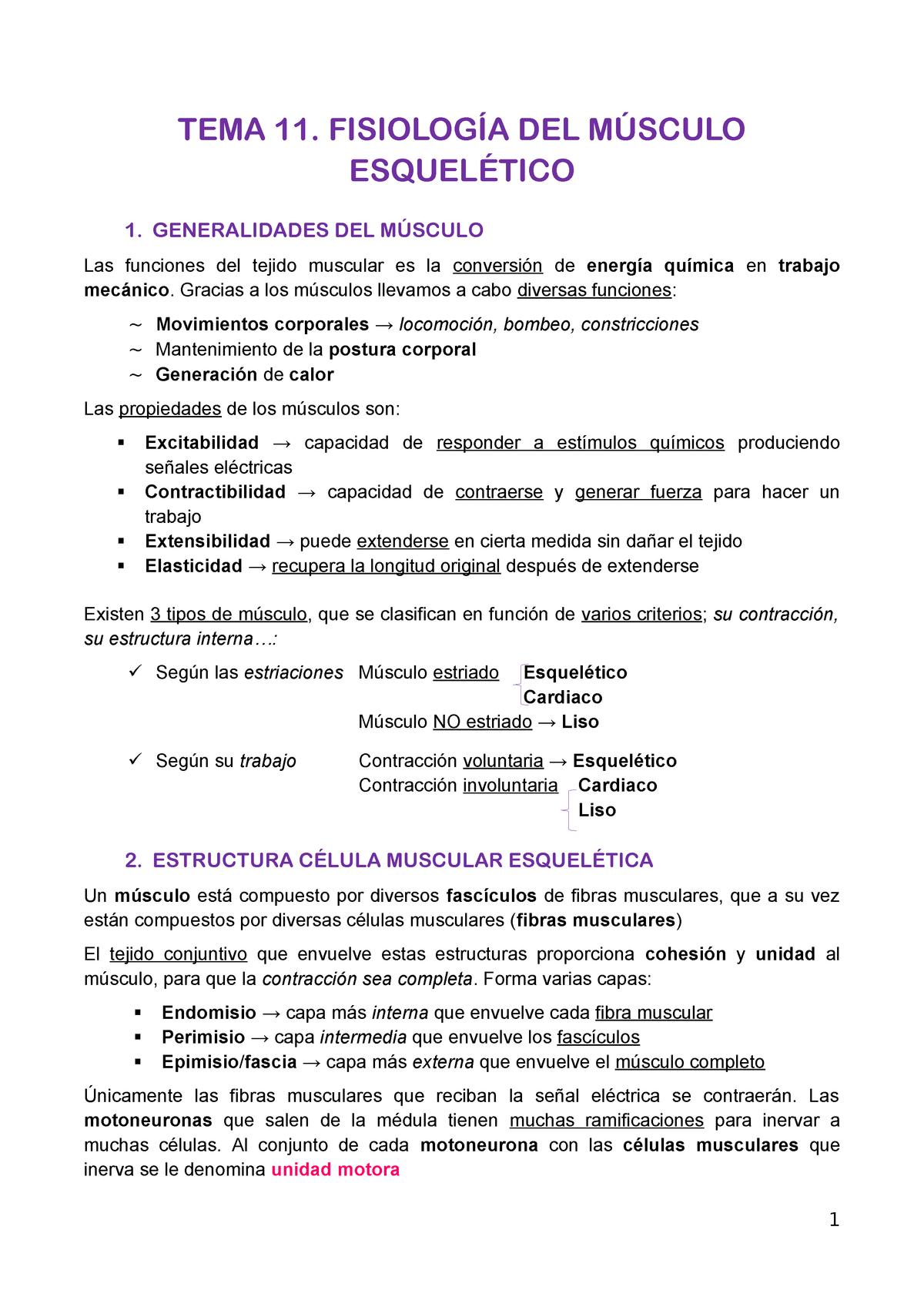 Tema 11 Fisiología Del Músculo Esquelético 9937001106