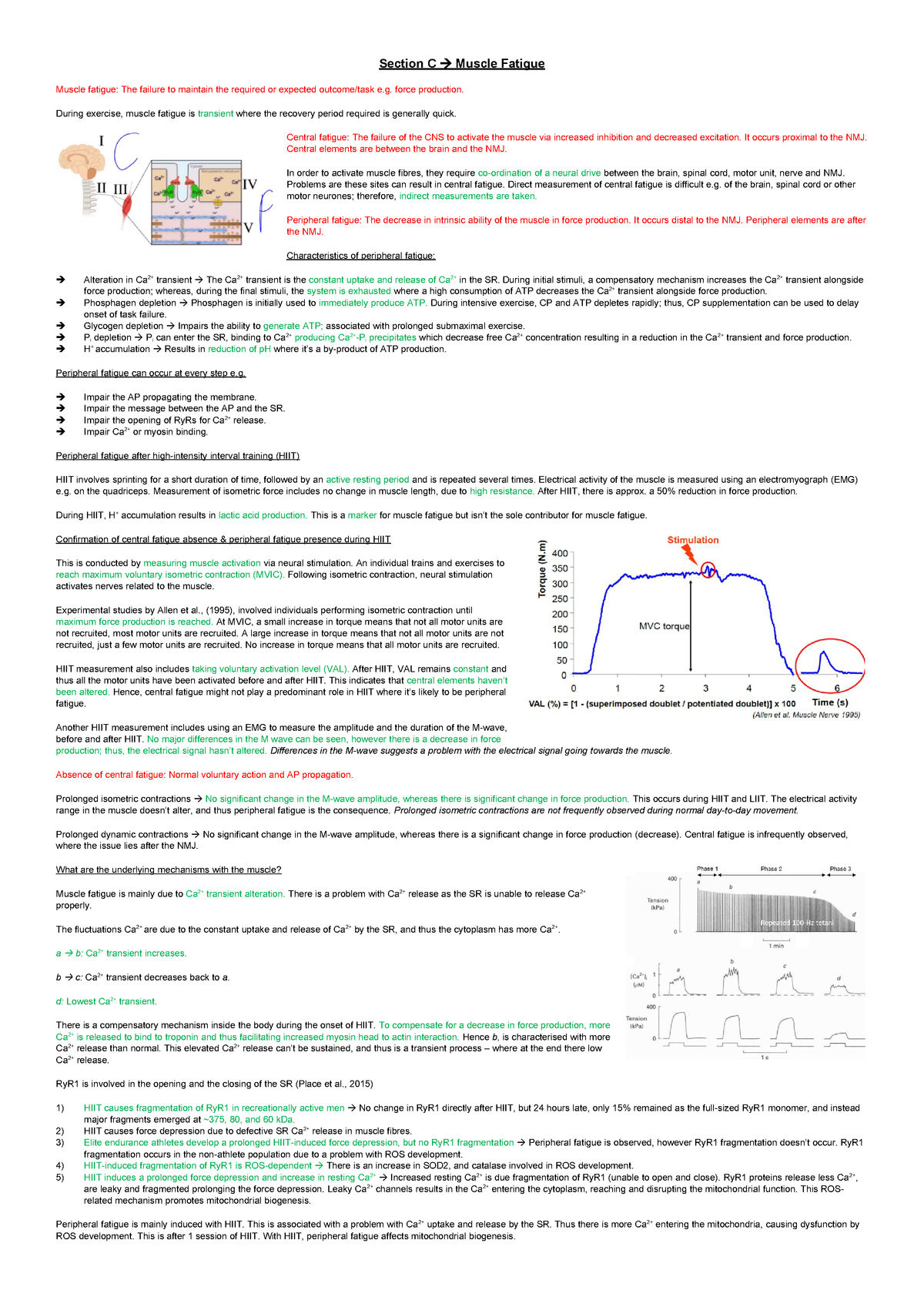 Muscle fatigue essay plan - MOD005669: Anatomy and