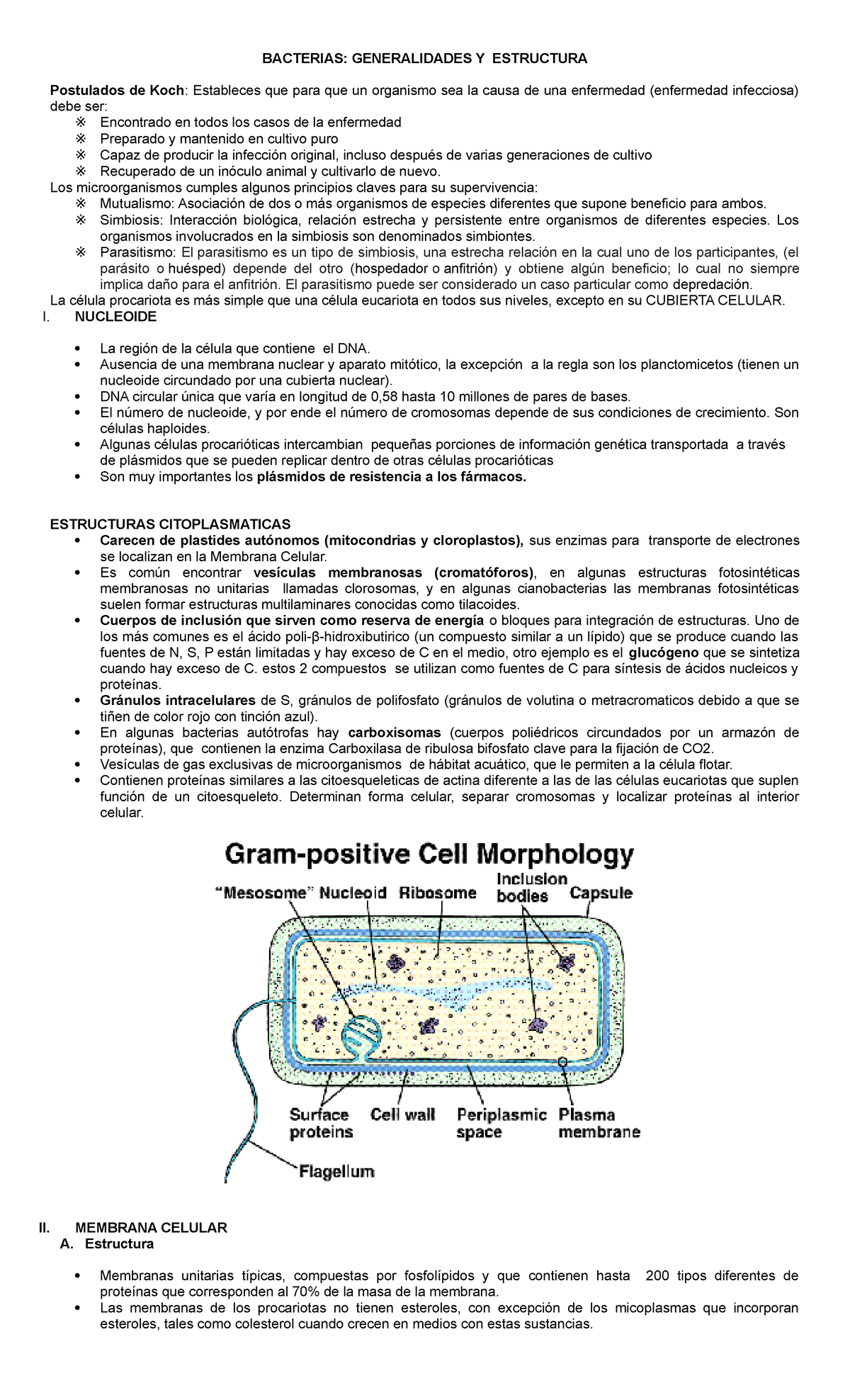 Bacterias Estructura Celular Resumen Microbiología Médica
