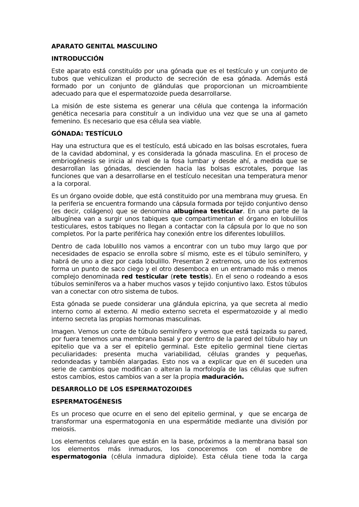 Aparato Genital Masculino Y Femenino Completos G2051109