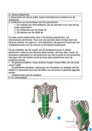 Abdominale spieren - Functionele anatomie