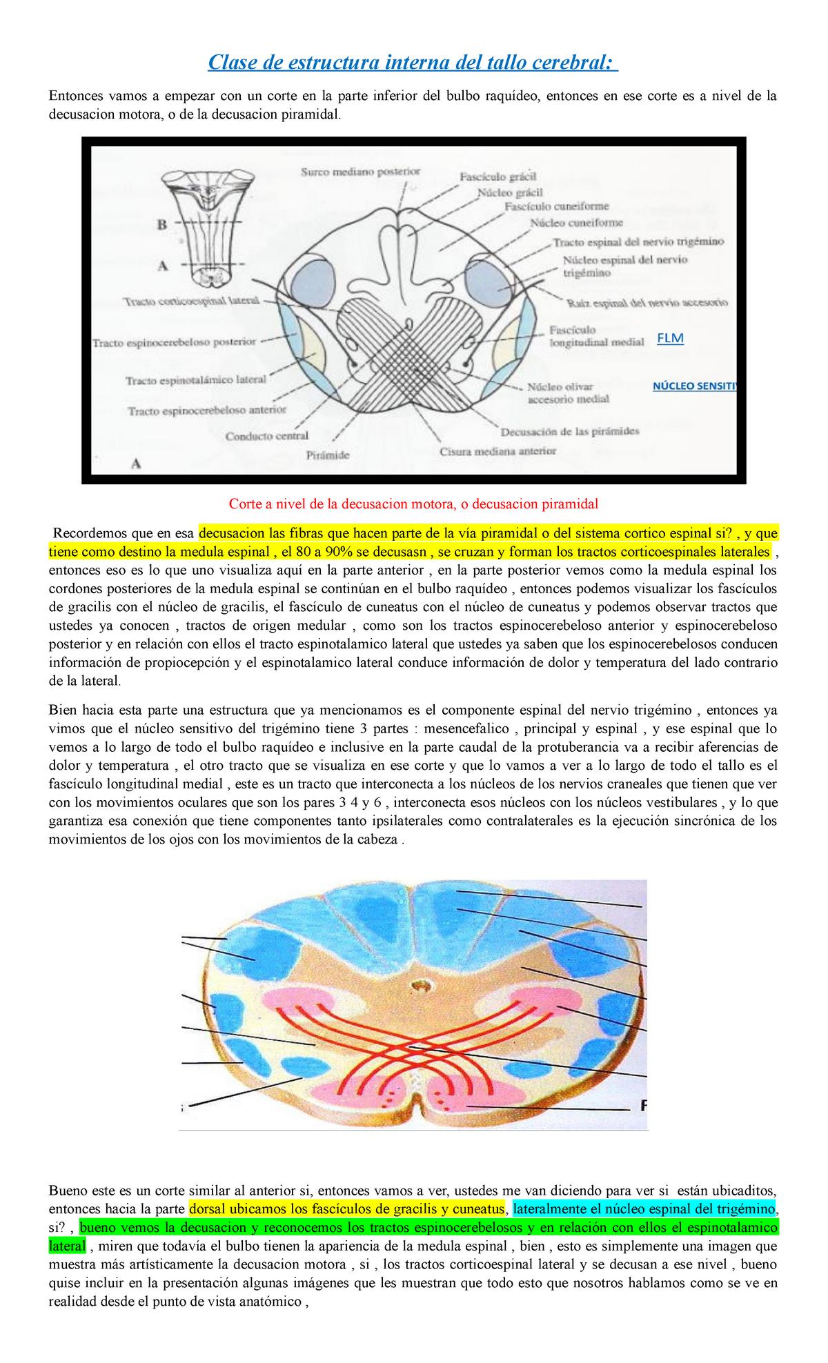 Clase De Estructura Interna Del Tallo Cerebral 23605 Uis