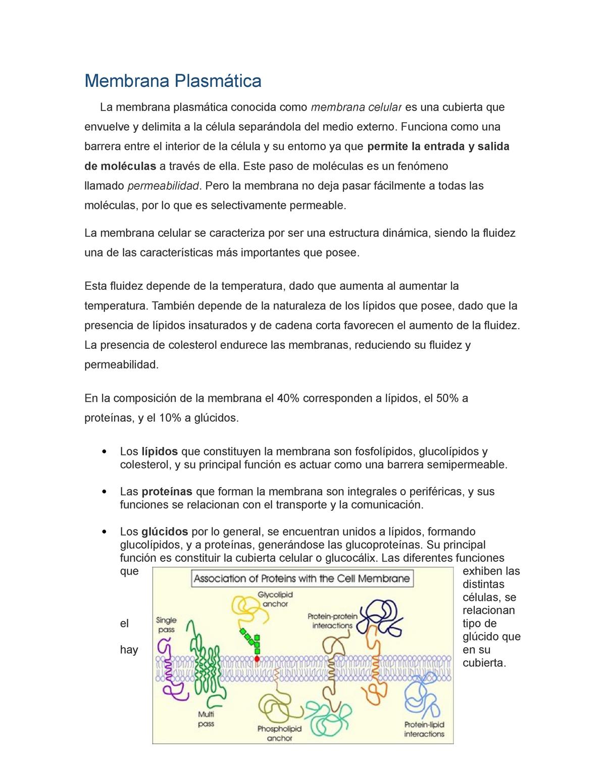 Membrana Plasmática Biologia T1015 Uvm Studocu
