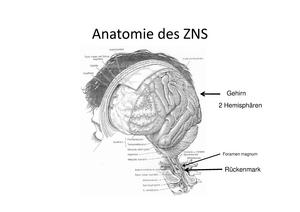 Anatomie Vorlesung