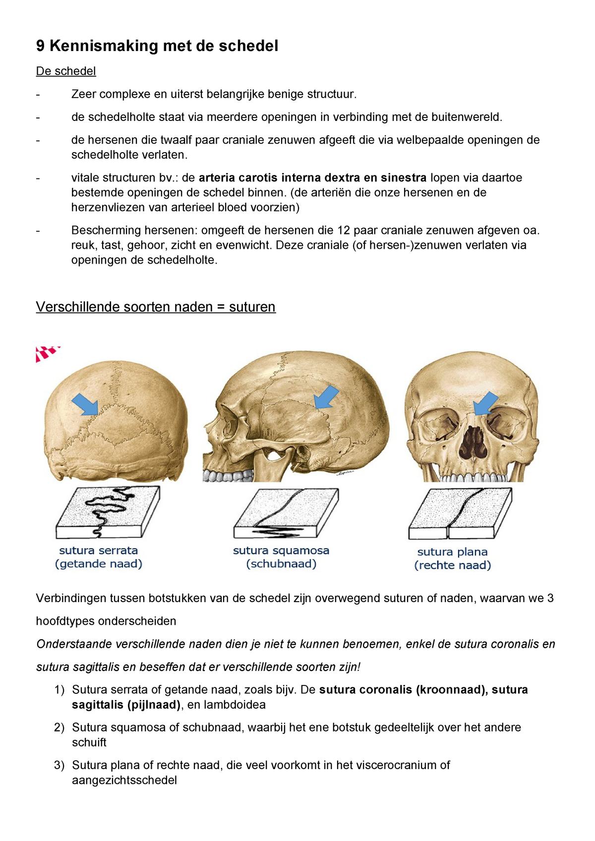 9 Kennismaking Met De Schedel Anatomie En Fysiologie I