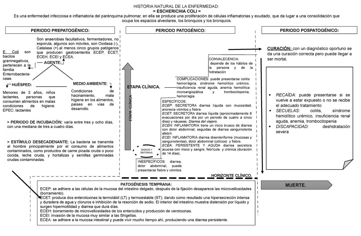 sintomas de gastroenteritis por e coli