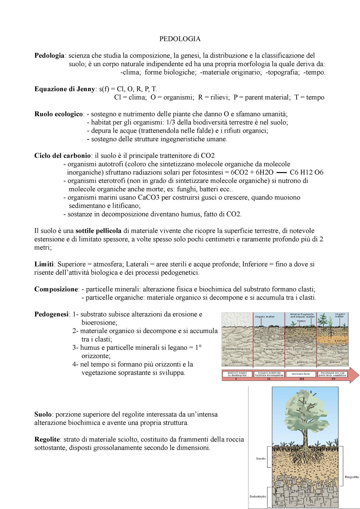 sintetizzano il processo di datazione del carbonio