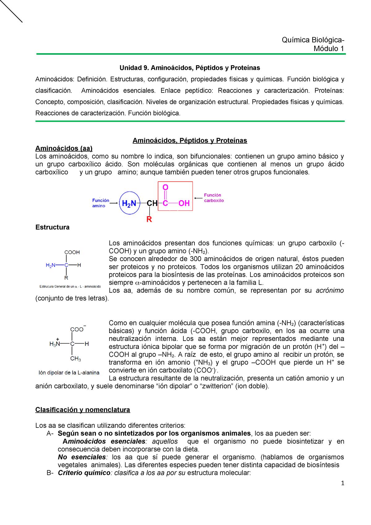 Unidad 9 Aa Peptidos Y Proteinas Química Biológica Studocu