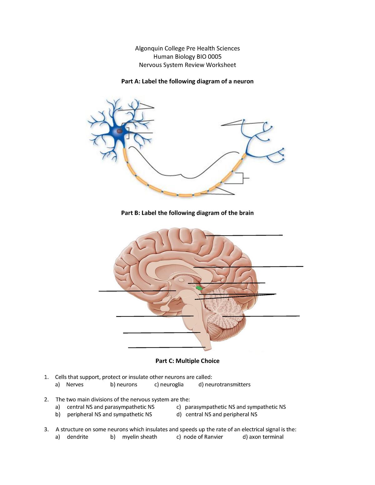 22 Label The Brain Worksheet - Label Design Ideas 22 Within Nervous System Worksheet High School
