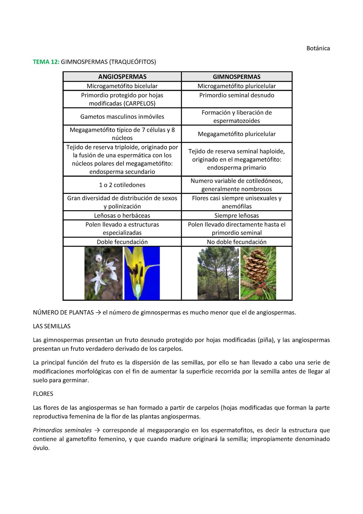 TEMA 12Gimnospermas - Botànica - StuDocu