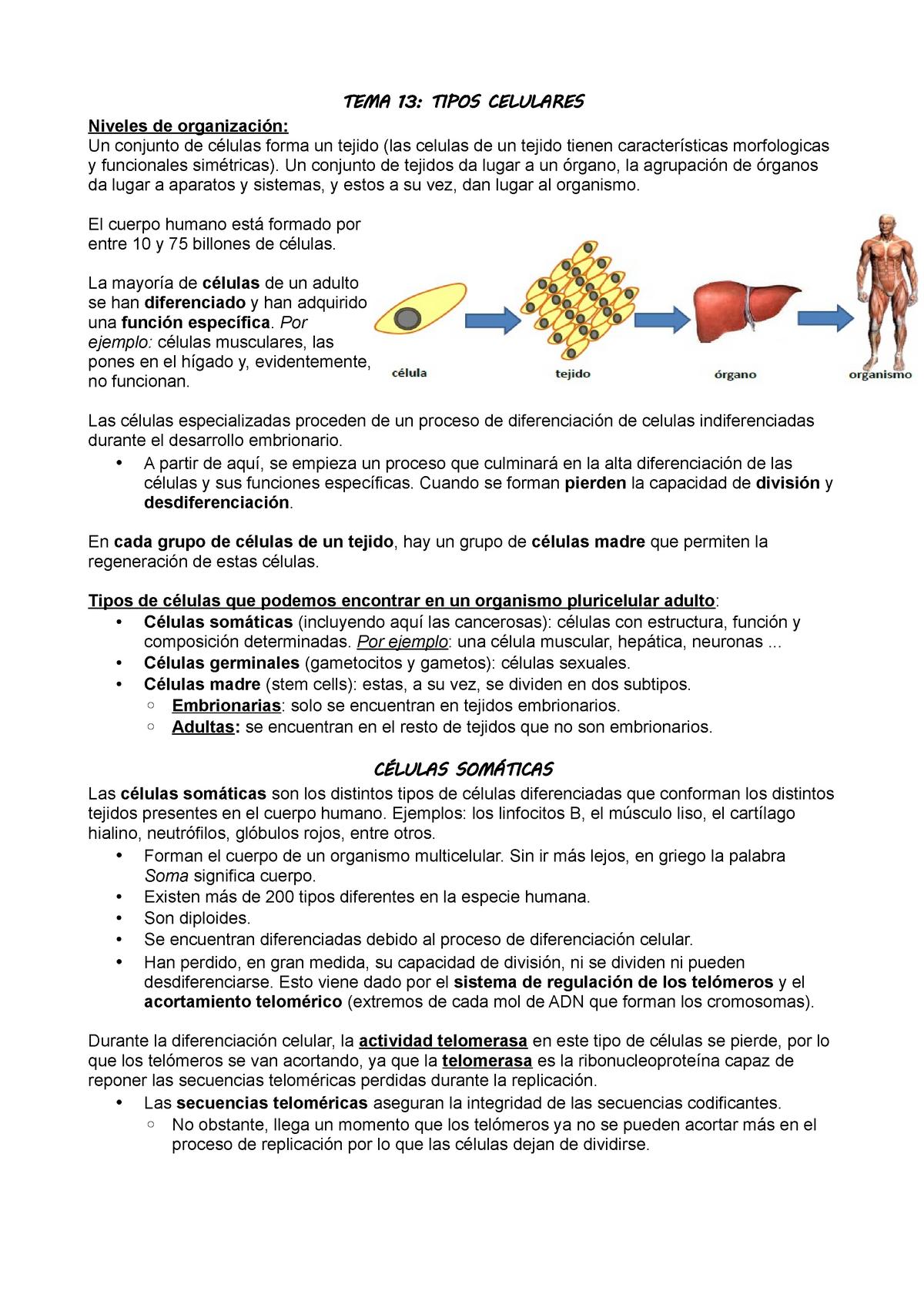 Tema 13 Los Tipos Celulares Biología Deusto Studocu