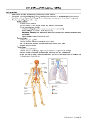 Summary - Bones and Skeletal Tissues (Ch6) - Introduction to Anatomy ...