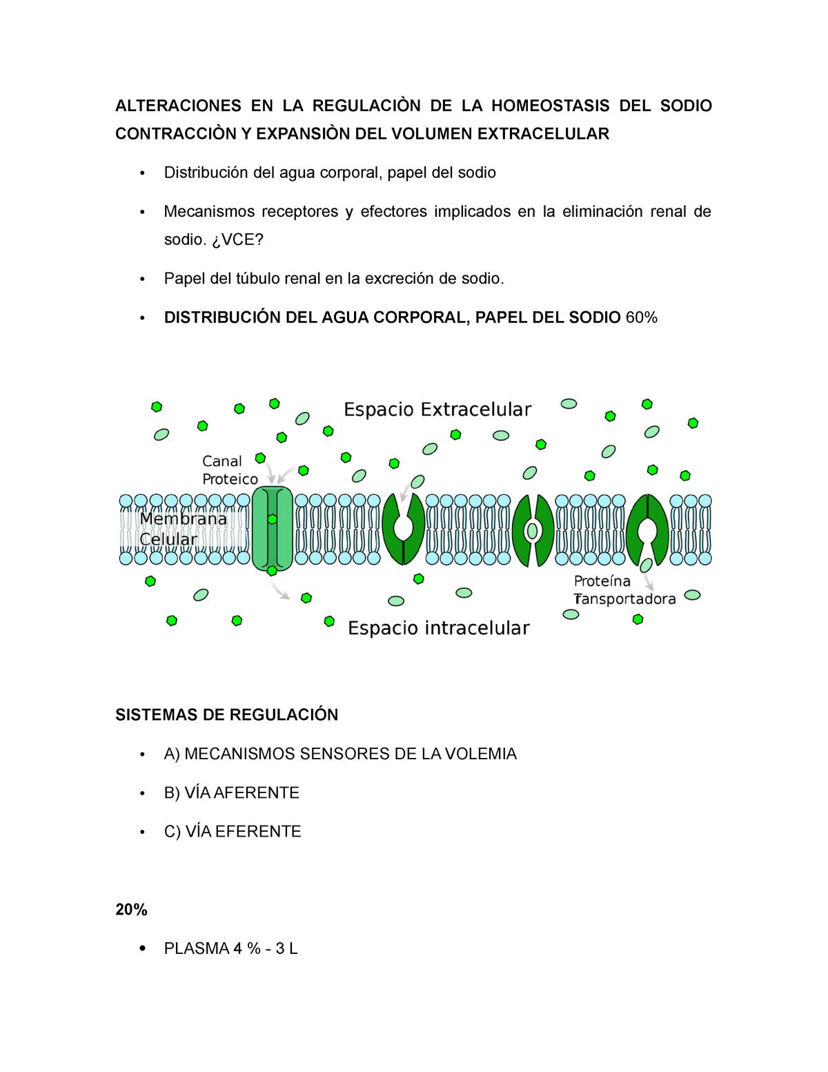 Papel de sodio hipertensión