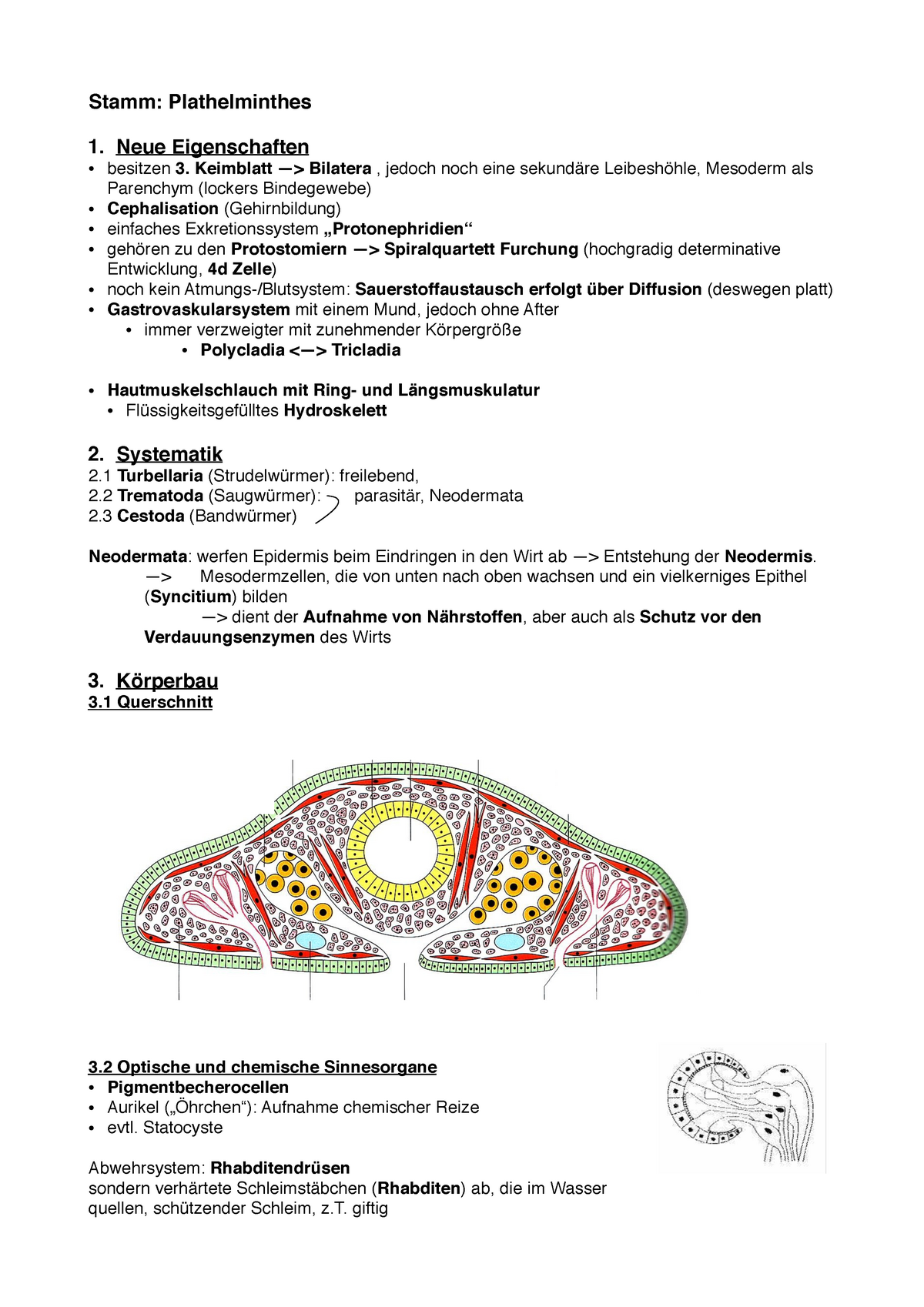 ultrahang mell papilloma