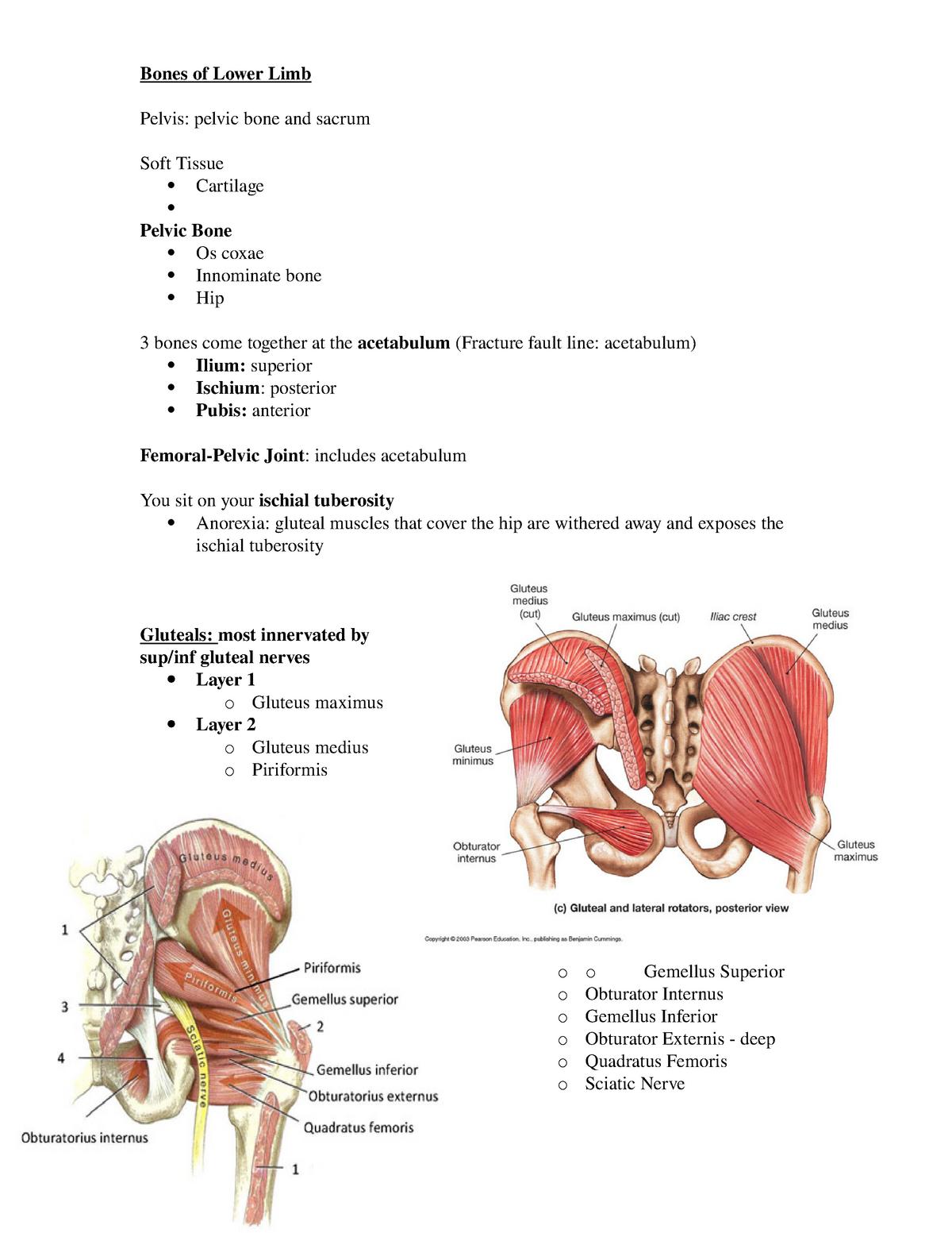 lower limb - dr  aqua ot anatomy course